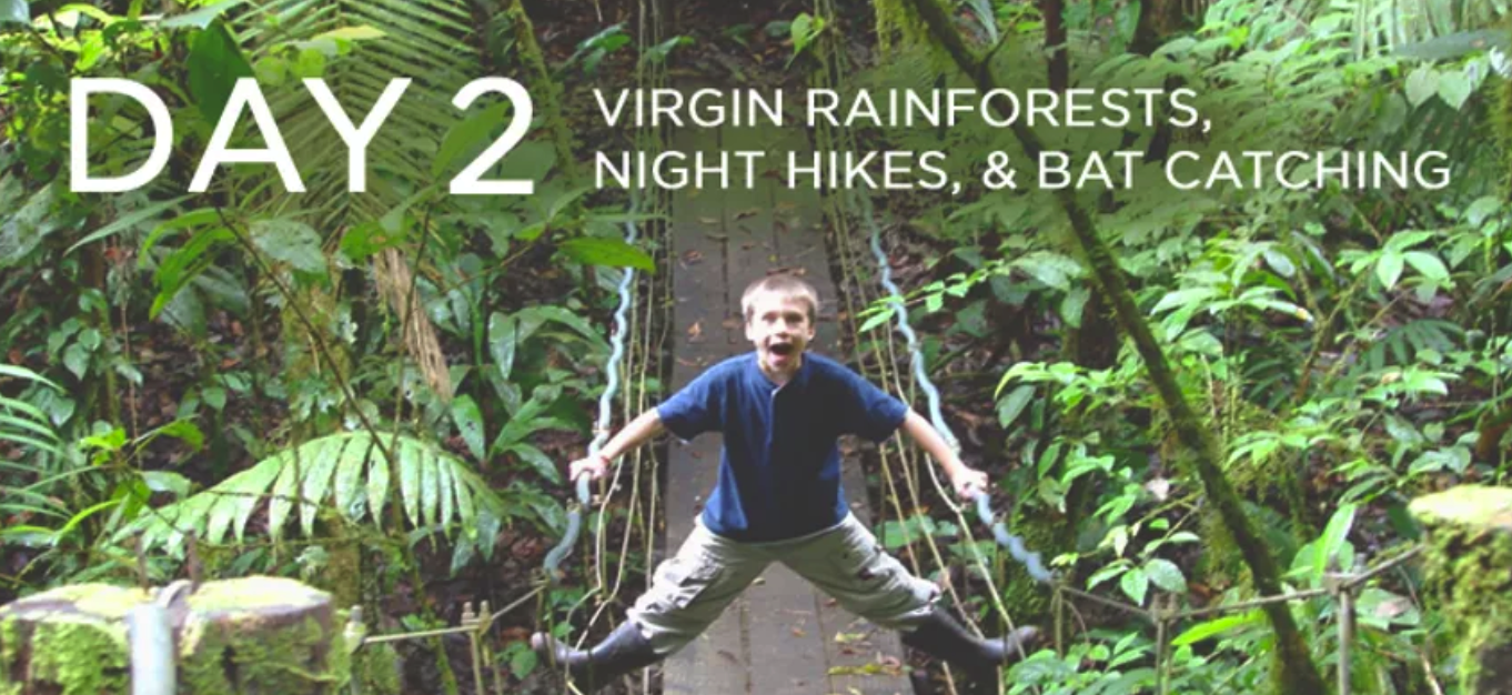 Day 2: Hiking Through Virgin Rainforest, Night Hikes, & Bat Catching